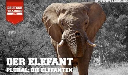 Wortschatz Tiere Elefant