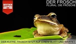 Vokabel Frosch