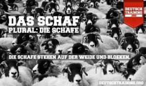 Vokabel Schaf