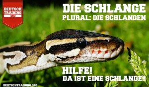 Vokabel Schlange