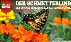 Vokabel Schmetterling