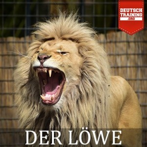 Vokabel Löwe